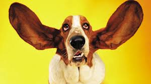 listen with big ears