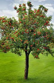use metaphors apple tree